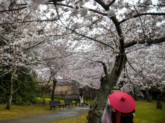 Cherry Blossom Festival goers enjoy looking at photos under their red umbrella during a rainy spring afternoon, April 4th, 2018.